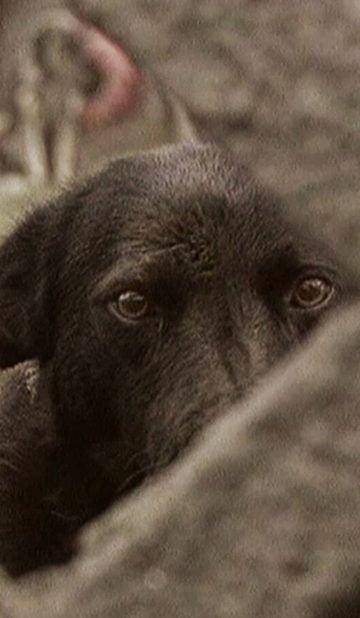A dog's Life by Alexandru Solomon - CINEPUB