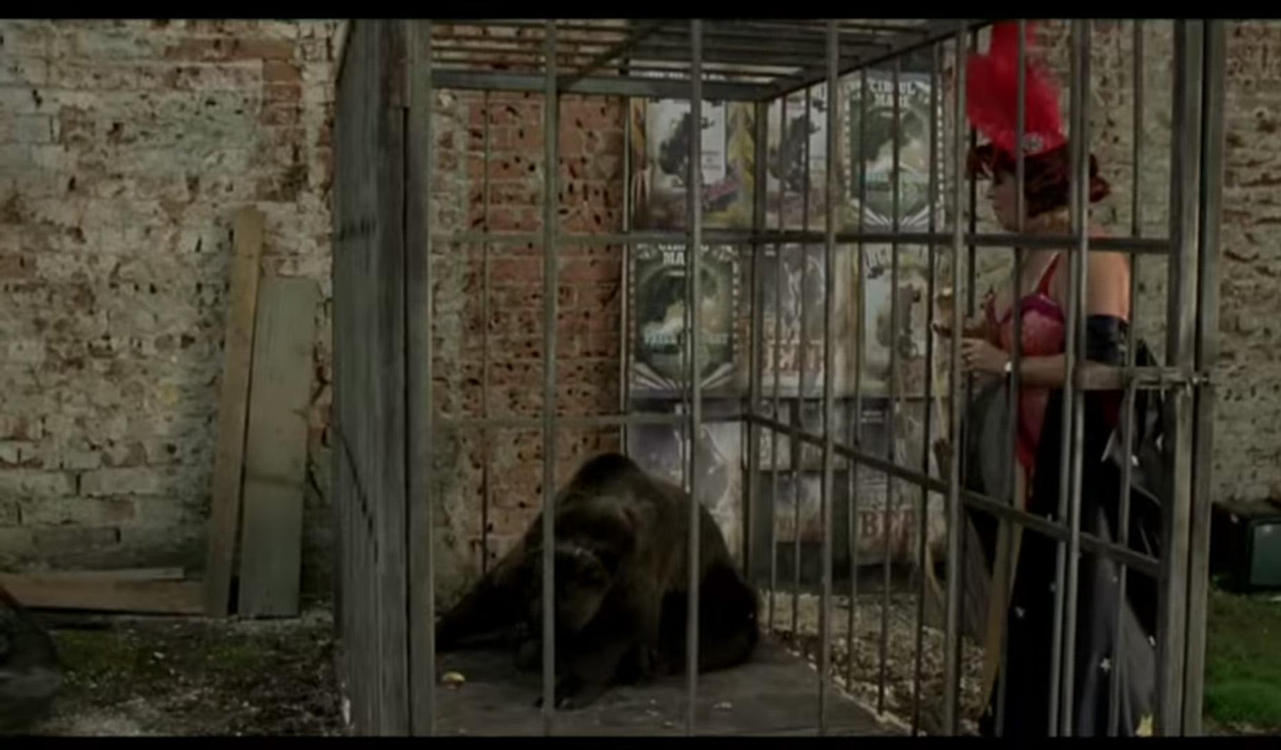 Ursul - de Dan Chisu - 2011