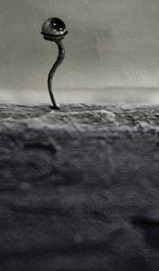 Liminal Introspect by Mircea Purdea - CINEPUB